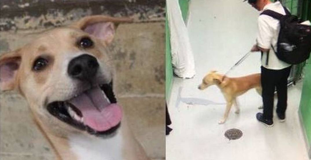Dognapper who stole pup from Toronto Humane Society arrested: police