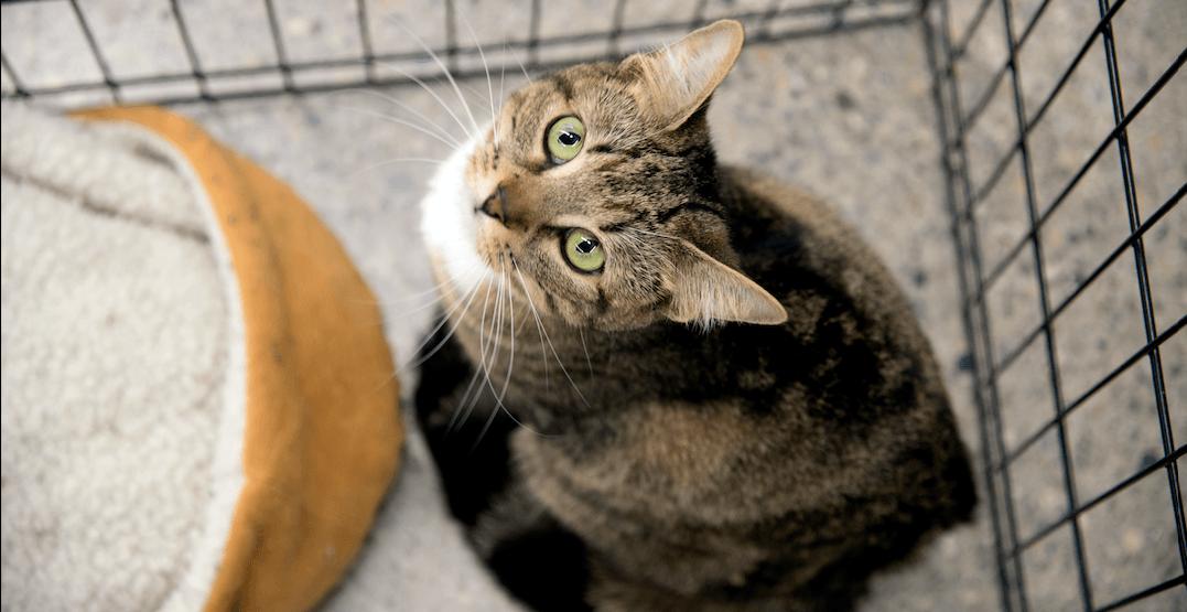 Abandoned cats crisis hits a high at Calgary animal shelter