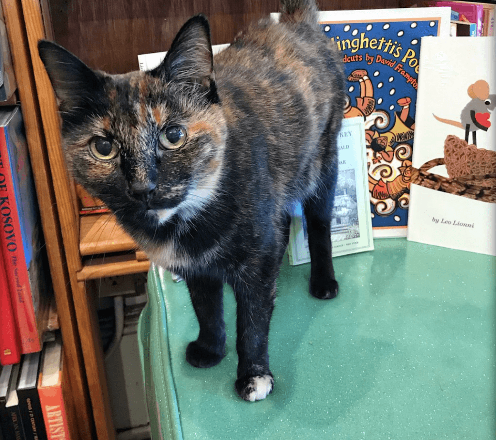 cat at bookstore