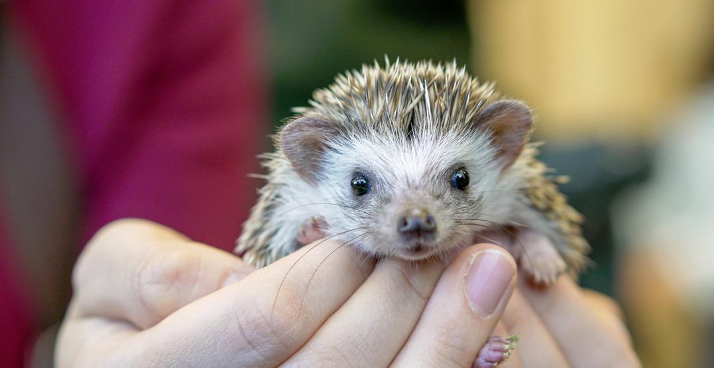 "Homes needed for ""Jackson 5"" hedgehogs left in shelter parking lot"