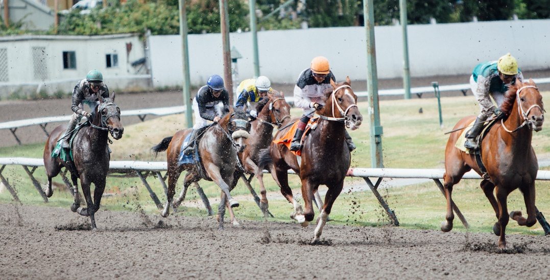 Watch the BC Derby & BC Oaks live at Hastings Racecourse this September