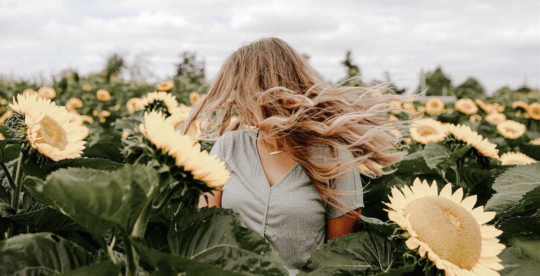 6 places to get the best sunflower photos in the Fraser Valley