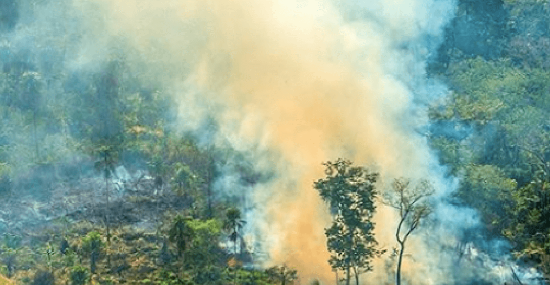 Canada sending $15 million to help battle Amazon Rainforest fires