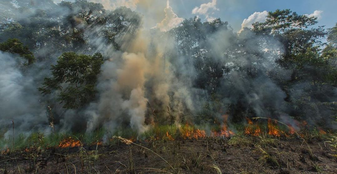 Brazil refuses $22 million pledged by G7 to fight Amazon Rainforest fires
