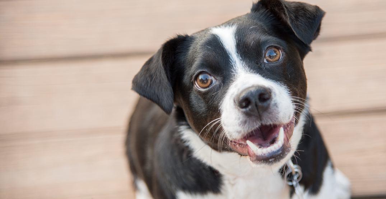 Mutt mixed breed dog