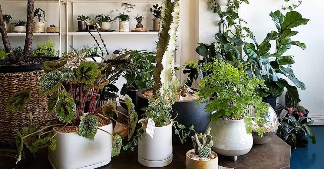Seven places to buy great indoor plants in Vancouver