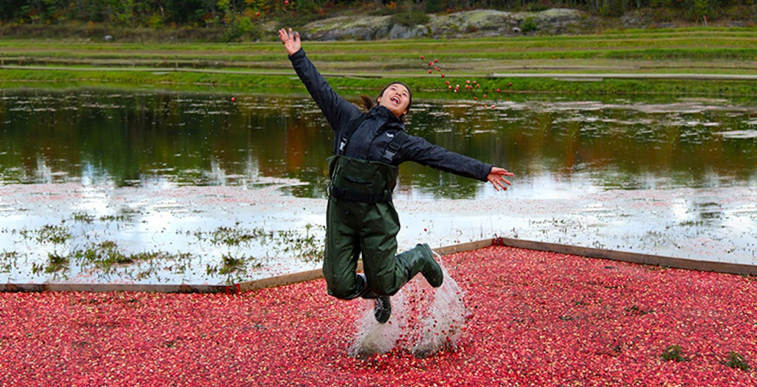 Add this 'cranberry plunge' near Toronto to your fall bucket list
