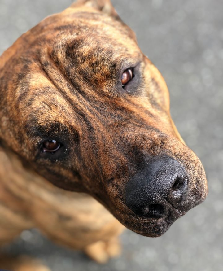 Gabe / New Westminster Animal Services