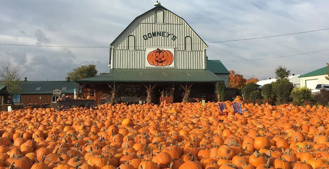 13 pumpkin patches you've got to visit near Toronto this fall