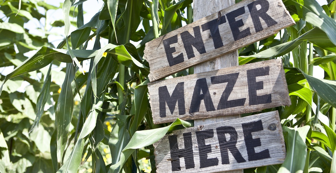 5 amazing corn mazes near Calgary to get lost in this fall