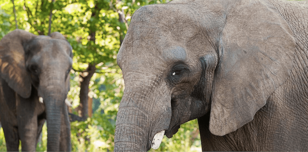 Granby Zoo welcomes 28-year-old African elephant (VIDEO)