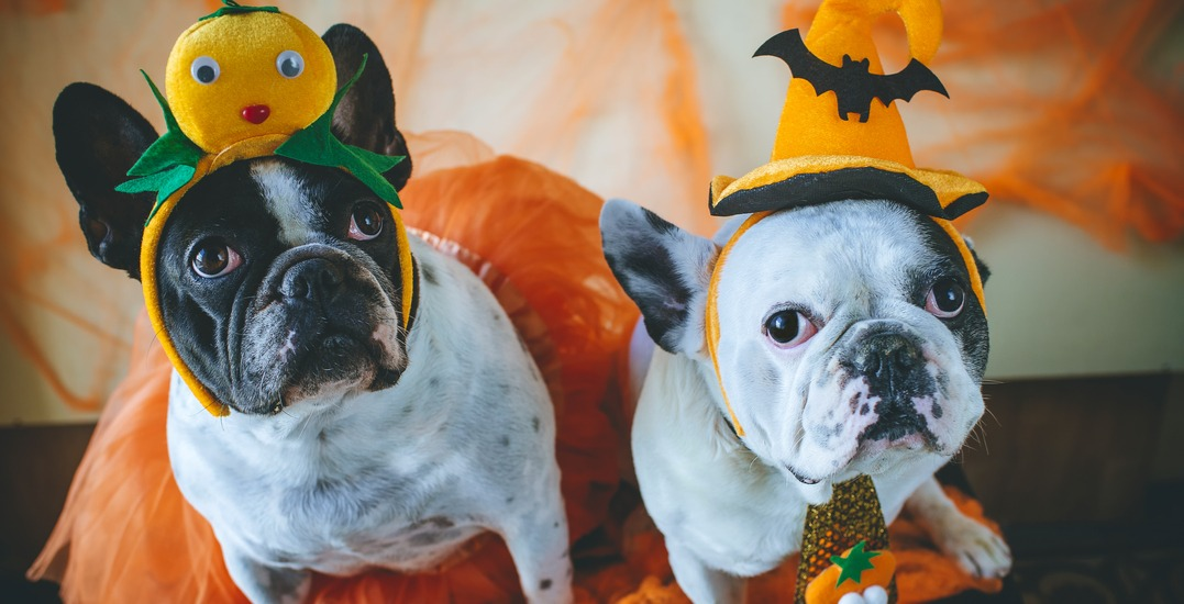 This Toronto bar is hosting a dog-friendly halloween party next month