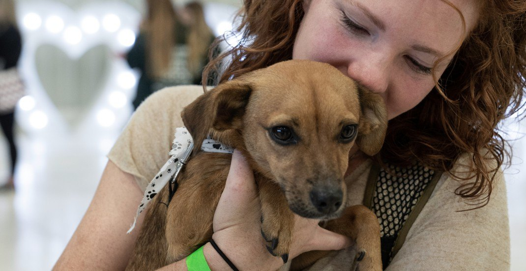 Dozens of rescue dogs find new homes at mass adoption event at Vancouver airport (PHOTOS)