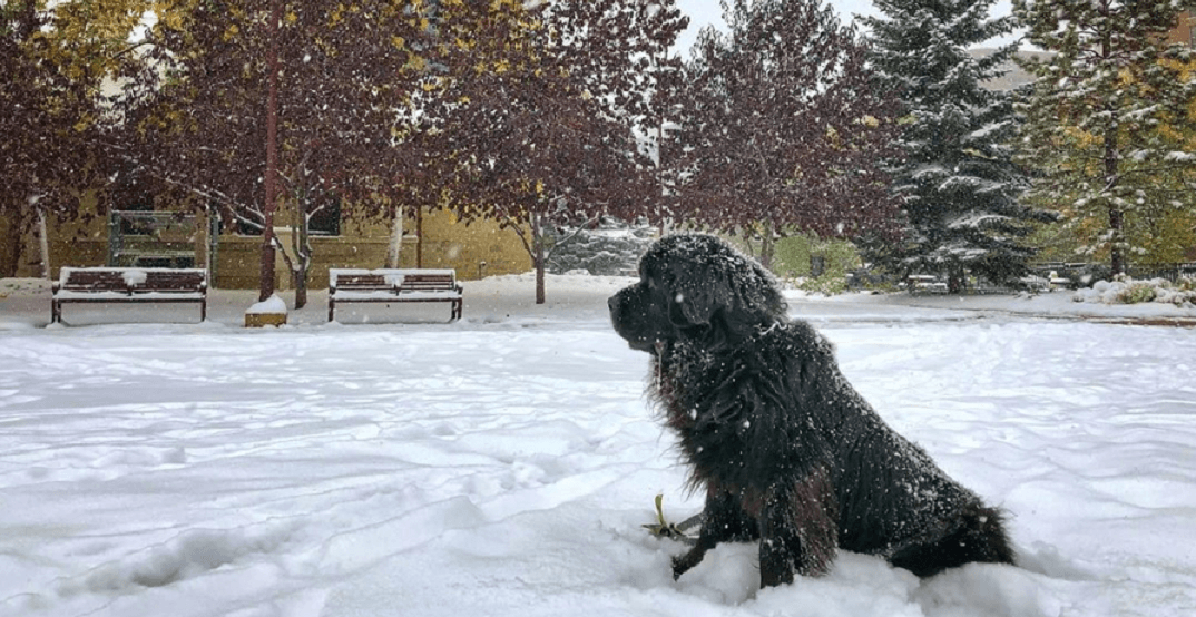 Sunday was the snowiest September day ever recorded in Calgary