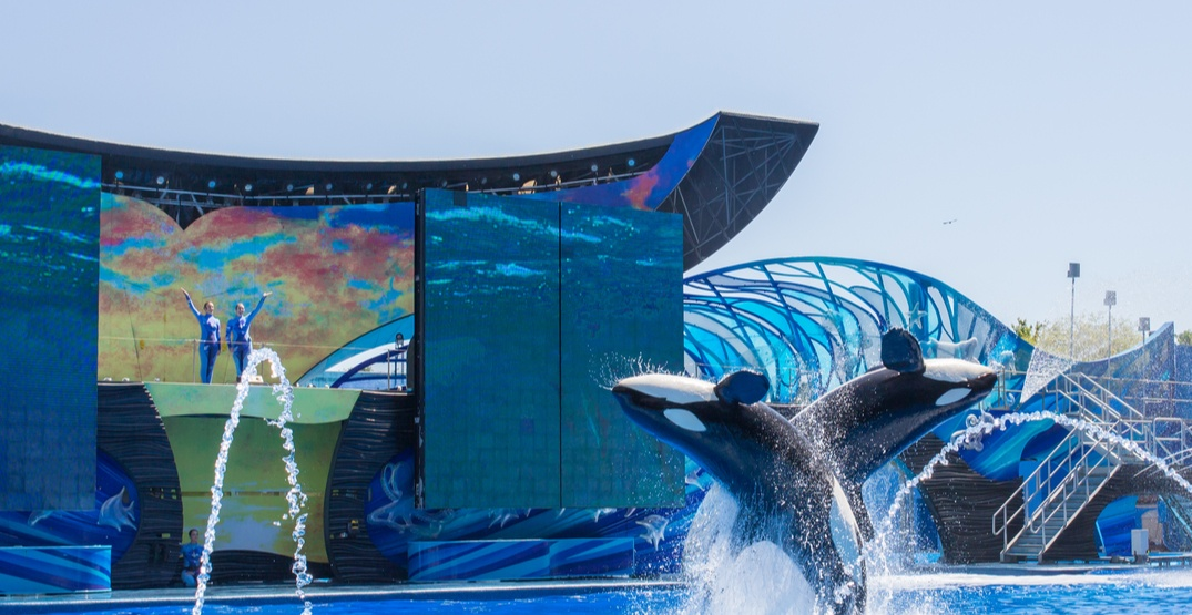 TripAdvisor ends ticket sales to attractions with captive dolphins and whales