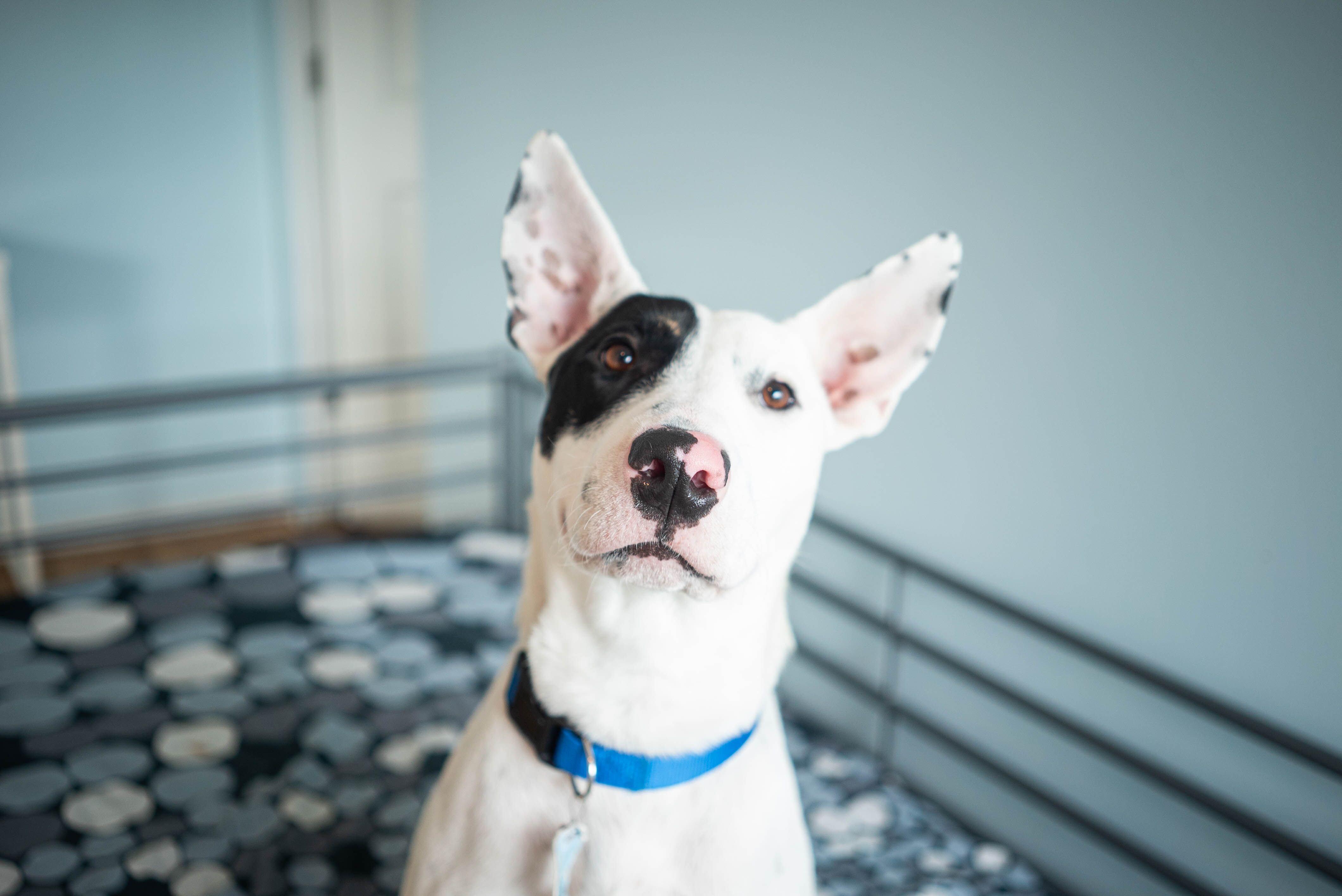 Hachi / West Coast Pet Project