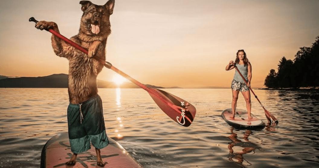 The VPD has released its annual police dog calendar for 2020