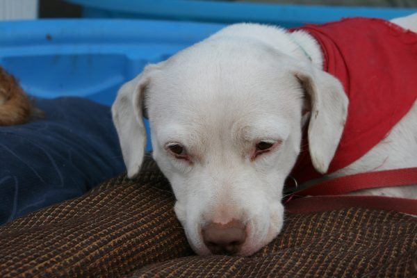 Dee / Thank Dog I Am Out Dog Rescue