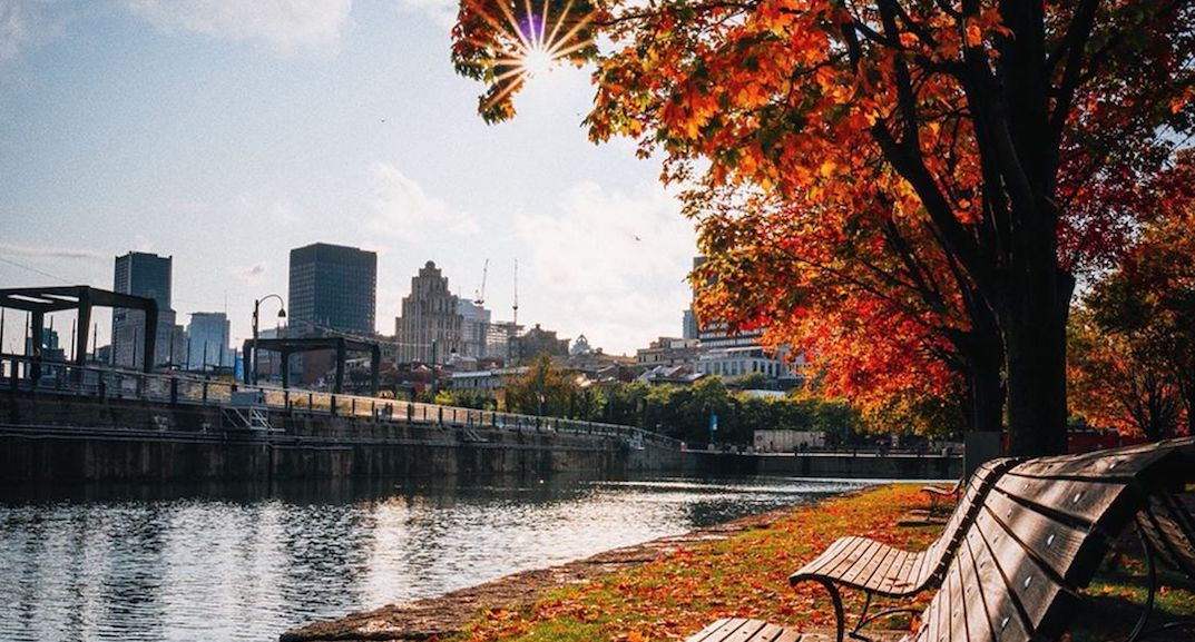 21 of the best photos of fall in Montreal (so far)