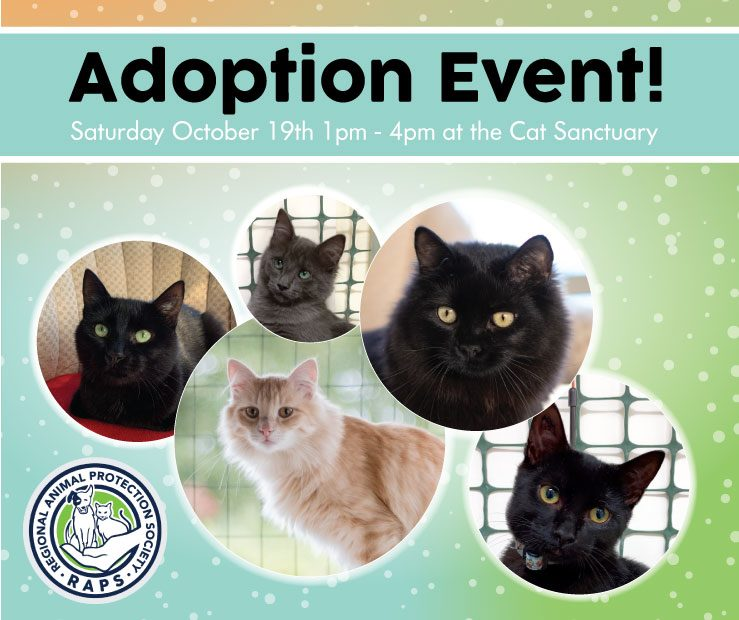 RAPS kitten adoption event