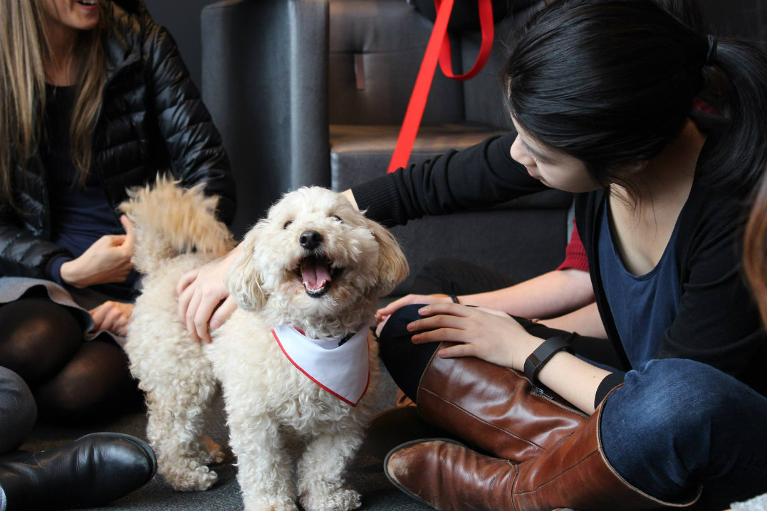 Meet the pups from the St. John Ambulance Therapy Dog Program