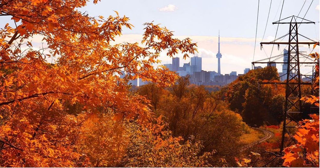 5 parks to see stunning fall foliage in Toronto (PHOTOS)