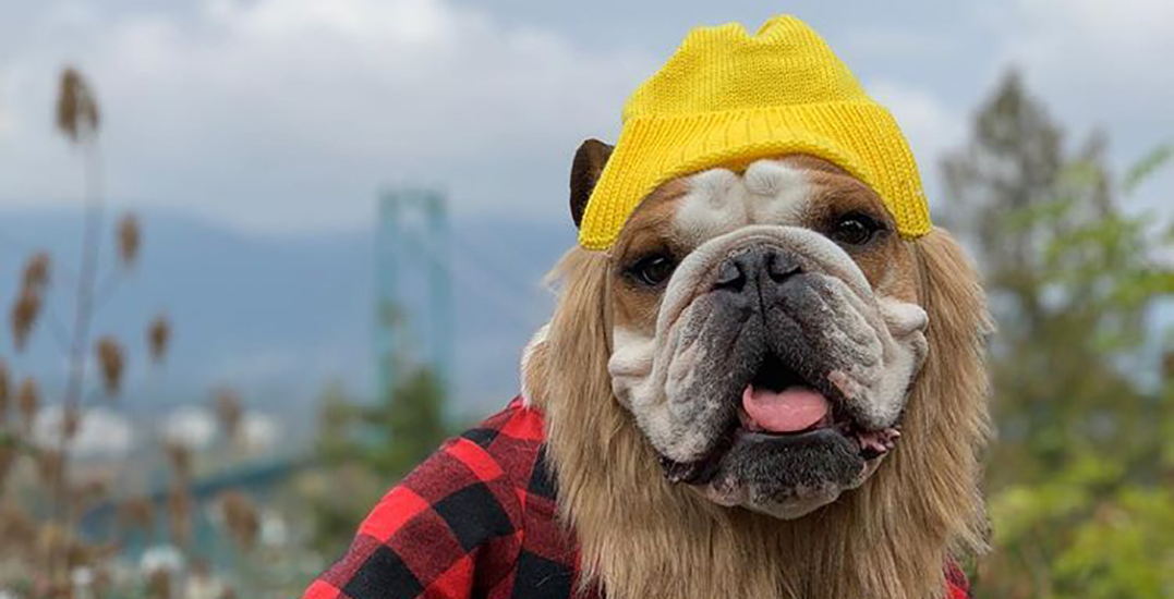 "There's a dog Halloween costume ""pawty"" taking place this weekend"