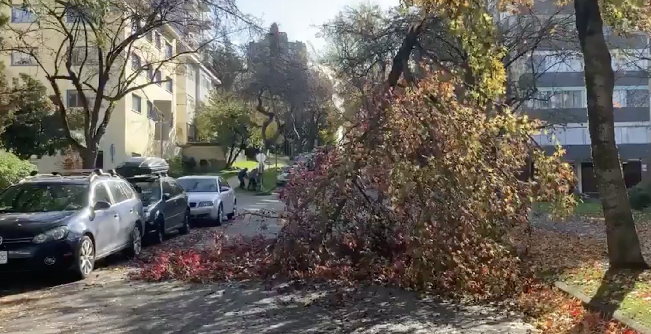 125,000 customers without power as windstorm sweeps BC