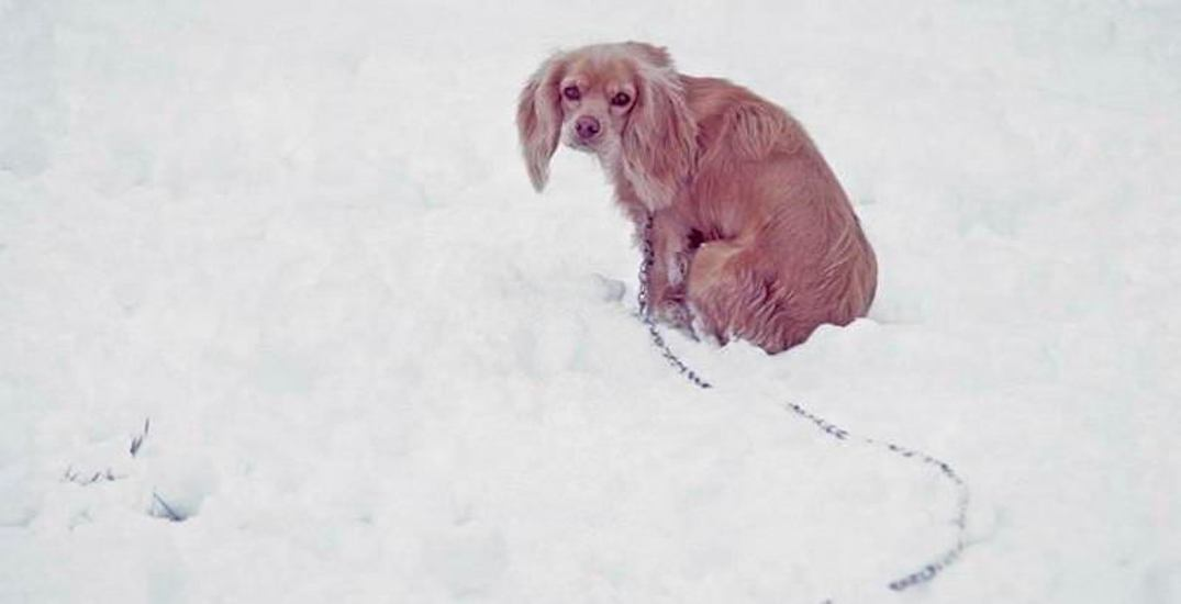 BC rescue sending pet supplies to Manitoba for dogs in freezing temperatures