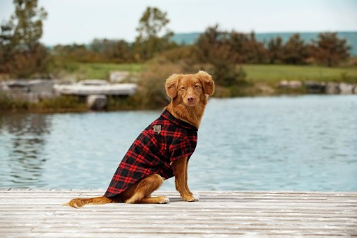Beaver Canoe shirt / PetSmart