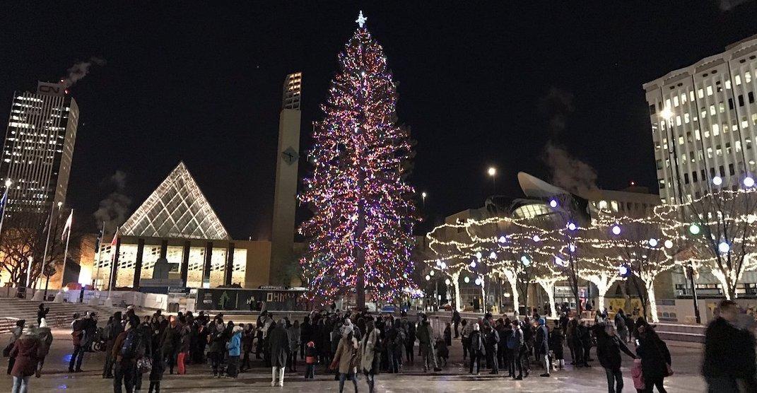 75-foot-tall tree will light up Sir Winston Churchill Square this Thursday