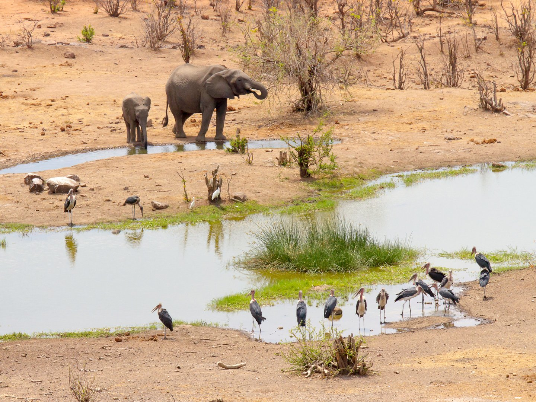 elephants-zimbabwe