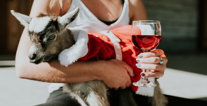 Abbotsford farm hosting Christmas-themed goat yoga