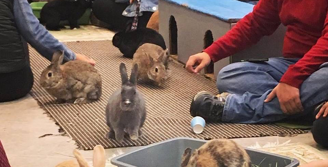 Vancouver's first-ever Bunny Cafe plans to open next spring