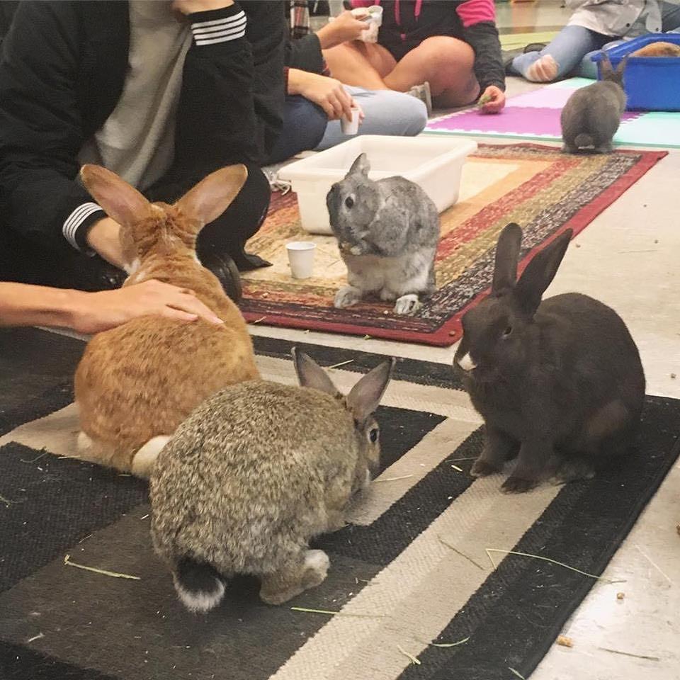 bunny cafe