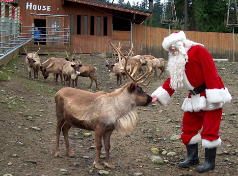 Pet, feed, and play with reindeer at this Issaquah festival