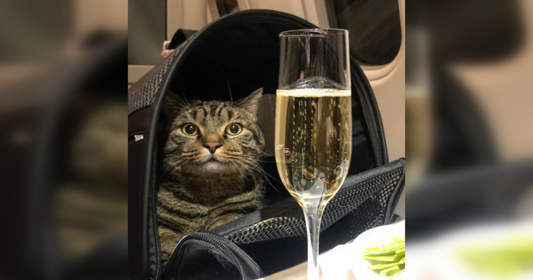 Flyer stripped of air miles for using elaborate scheme to smuggle fat cat onto plane