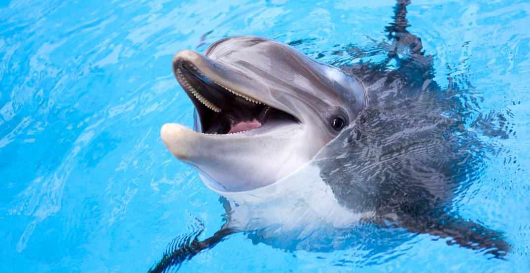 "New report exposes ""extreme"" dolphin cruelty in the travel industry"