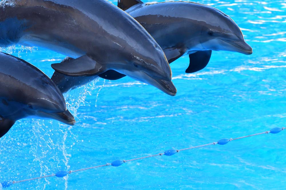 dolphin-show