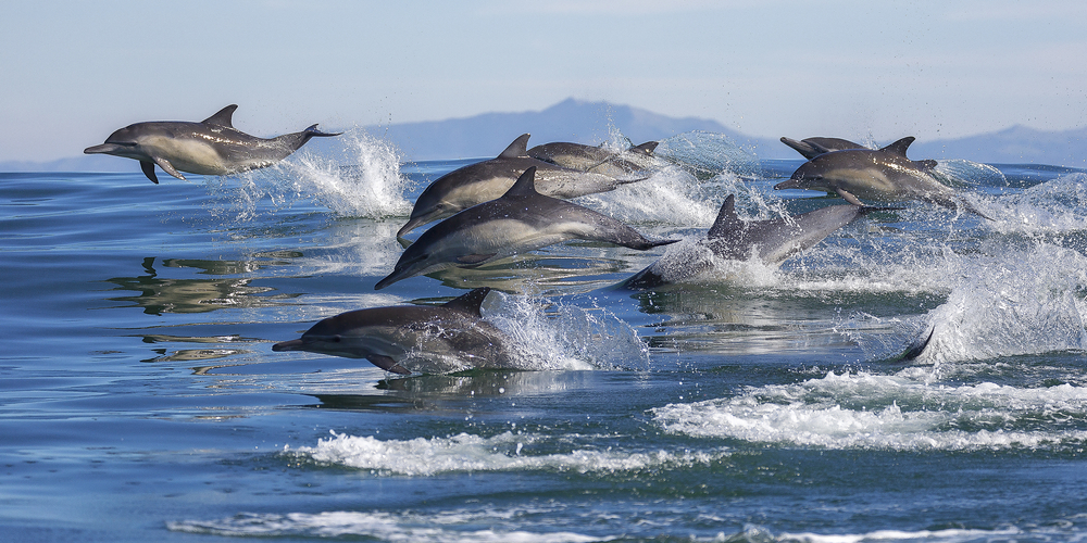 wild-dolphins