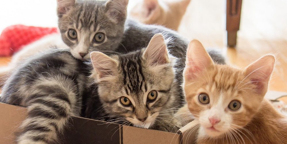 The Meowfest cat convention is returning to Metro Vancouver August 1