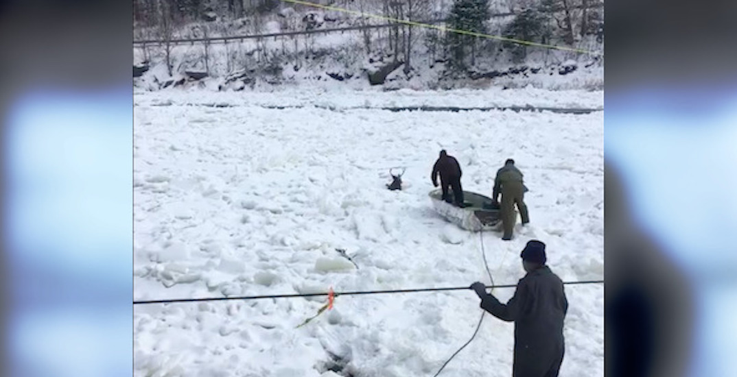 Small town Quebecers rescue deer that fell through ice (VIDEO)