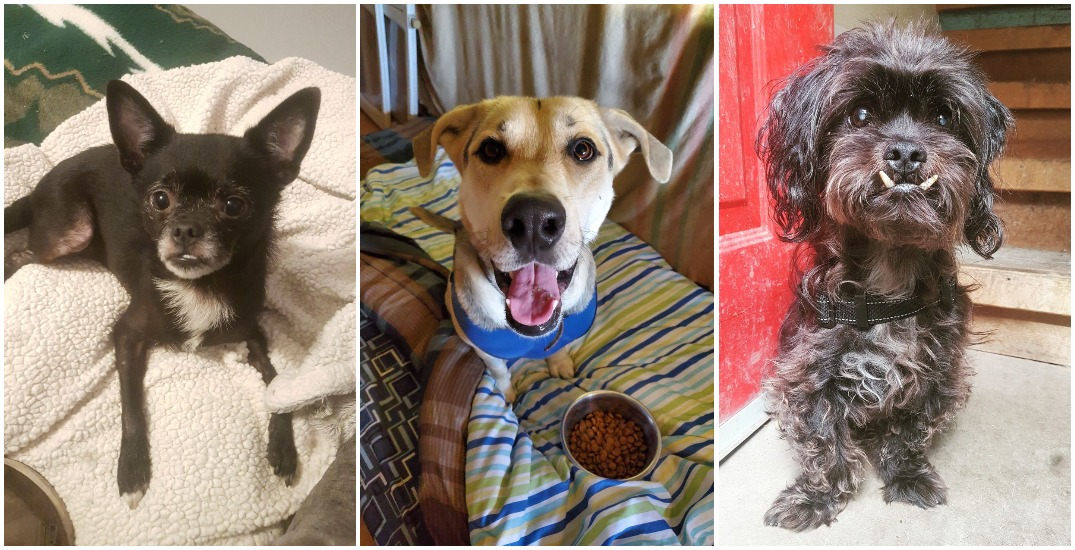 Adopt Me: 7 dogs that have been waiting for a home for too long
