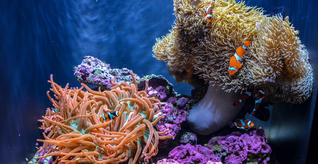 The Seattle Aquarium is hosting an epic Fishtival this month