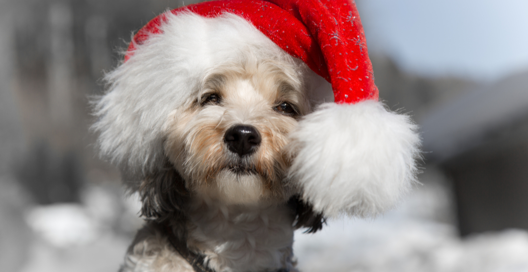 15 great dogs that need a home for the holidays
