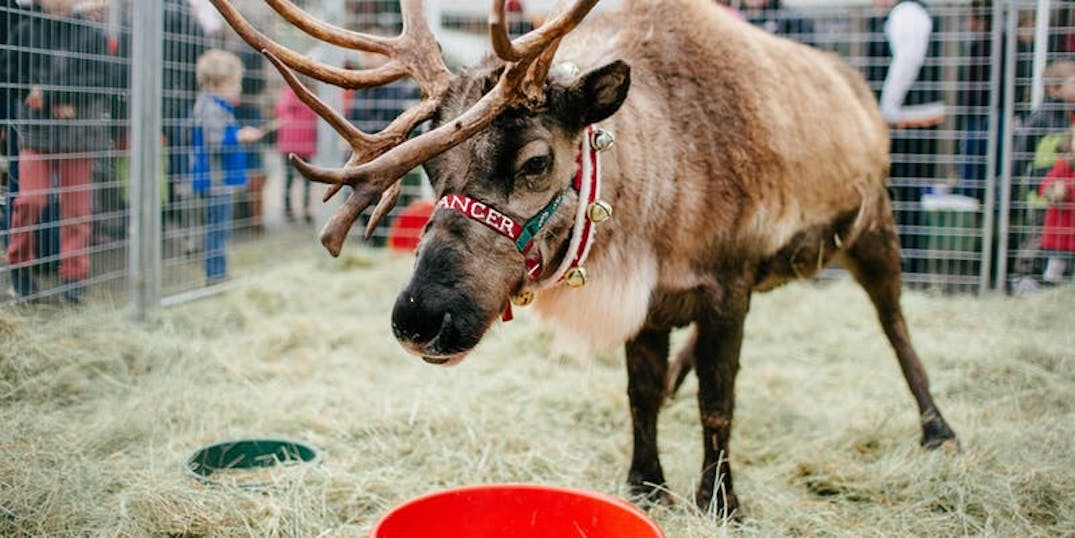 Meet Rudolph the red-nosed reindeer this holiday season at Lake Oswego