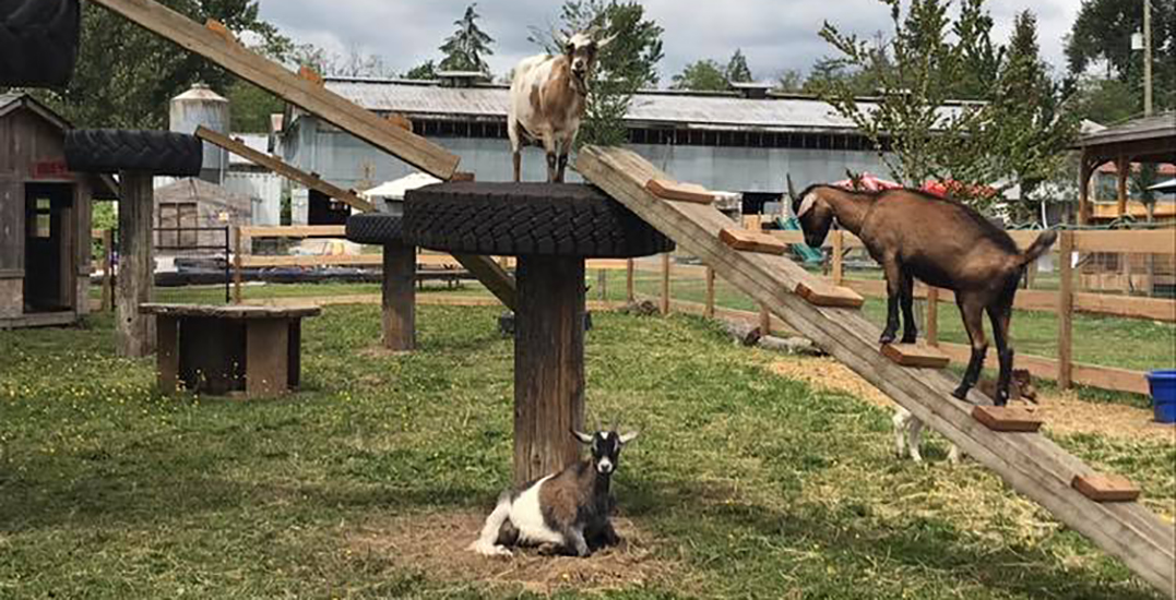 City of Maple Ridge pulls plug on illegal petting zoo
