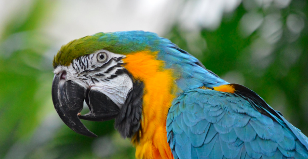 Escape to the tropics at Bloedel Conservatory this holiday season