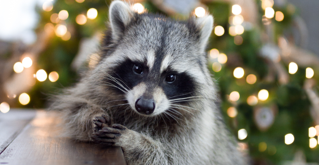 51 animals that are illegal to own as pets in Washington state