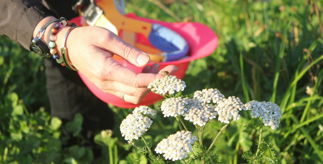 A new pollinator garden is building buzz in Metro Vancouver